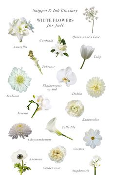 Pictures Of All Types Of White Flowers Kidskunstfo