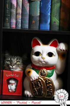 Maneki-Neko(Lucky cat in Japan)