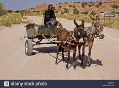 Stock Photo - Herero man on donkey cart, Damaraland, Namibia Baby Donkey, Cartoon Cow, Sand Painting, Nerf Gun, African Tribes, D D Characters, Donkeys, Farm Animals, Vectors