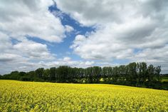 Landscape of May in Ettingshausen