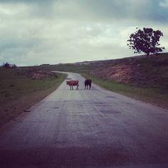 Country Roads, Running