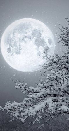 Winter Moon ~~ Moon light by Lupone Giovanna on Snow Scenes, Winter Scenes, Ciel Nocturne, Winter Wonderland Christmas, Prim Christmas, Christmas Ideas, Shoot The Moon, Moon Magic, Beautiful Moon