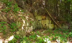 Cetatea Dacică ''Feţele Albe'' şi Povestea Ielelor din Temple Trunks, Plants, Drift Wood, Stems, Tree Trunks, Plant, Planting, Planets