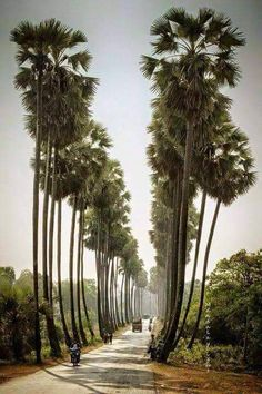 This looks like the Cambodian version of Sunset Boulevard in Los Angeles! Just proves how similar places can be that are far away from one another
