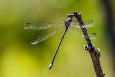 .: Delicate Damsel :. by Jon Rista on 500px