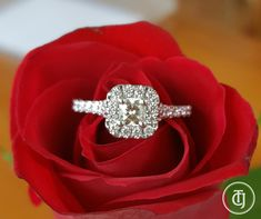 Women's 1 Ct Cushion Cut Diamond Halo Engagement Ring In White Gold Over Halo Diamond Engagement Ring, Engagement Ring Settings, Engagement Rings, Diamond Rings, Ideal Cut Diamond, Diamond Cuts, Cushion Cut Diamonds, Princess Cut Diamonds, Vintage Diamond