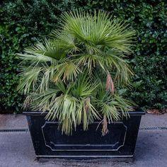 A planter at Kew station.