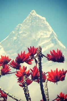 Nepal!