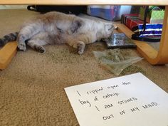 This Cat Needs an Intervention