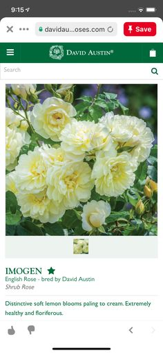 Shrub Roses, David Austin, English Roses, Shrubs, Bloom, Shrub
