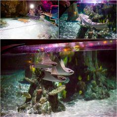 Need A Little Fishy Fun Take The Kids To The Sea Life