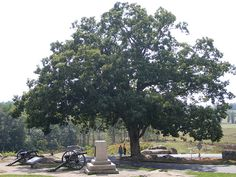 Ive heard the Gettysburg battlefield is mystically sacred. This tree has been standing since before the battle and shows dozens of bullet marking. Im gonna go someday!