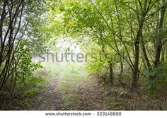 Walking your dog in the countryside - stock photo