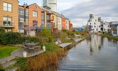 Swede dreams: can Malmö's green points system help rewild London? | Cities | The Guardian Sedum Roof, Uk Capital, Tower Hamlets, Bug Hotel, Urban Nature, Other Space, London City, The Guardian, Ecology