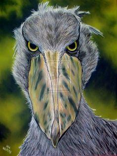 shoe billed stork - poor bird. Looks like evil to me.