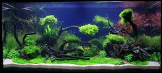 Beautiful Aquascaping Designs In Aquarium White Sand Beach With Trees And Stone Decoration In Black And Green Color Combination