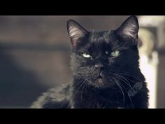 Caught On The Web: cats in commercials; http://caughtontheweb.blogspot.com/2015/09/cats-in-commercials.html