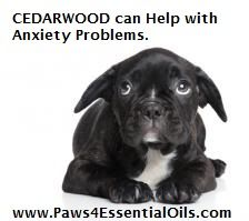 Anxiety is a problem that I deal with on a regular basis with dogs and their families. When working with an anxiety based problem, especially when you need to leave, I HIGHLY recommend diffusing a calming oil CEDARWOOD is an option for you.  I have had good success using CEDARWOOD on dogs that have separation anxiety, as well as those that get anxious around strangers...be it people or other dogs.