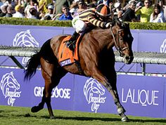 The experiment to try Little Mike on Meydan's Tapeta surface didn't turn out quite as well as expected for trainer Dale Romans, but the 6-year-old son of Spanish Steps did get the acclimatization needed for his return to the grass in the $5 million Dubai Duty Free Sponsored by Duty Free (UAE-I) March 30.