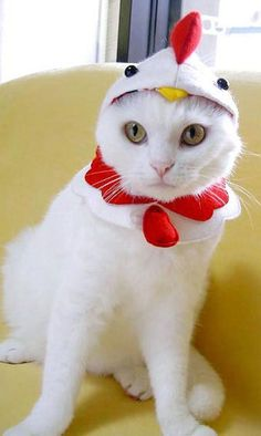 cat costumes - Japan-based Pet Office is a company that specializes in creating pet costumes and accessories. The company's extensive collection of cat costumes f. Kittens In Costumes, Pet Costumes, Halloween Costumes, Cute Cats, Funny Cats, Funny Animal, Chicken Hats, Cat Dressed Up, Funny Cat Photos