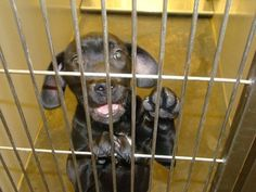 PLEASE REPIN!! IN WINDER, GA NEED HELP...  http://www.examiner.com/article/hope-for-two-puppies-at-georgia-animal-control?CID=examiner_alerts_article