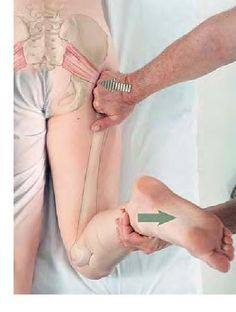 The Piriformis is a great muscle to get a treatment on to reduce sciatic pain, low back pain, or hip joint pain.