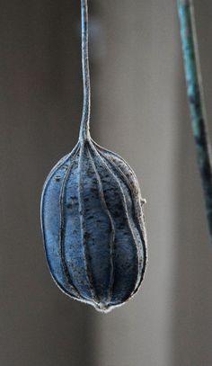 ❧ Couleur : Gris et bleu ❧