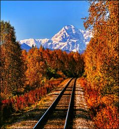 Wilderness Railroad, Mt. McKinley, Alaska