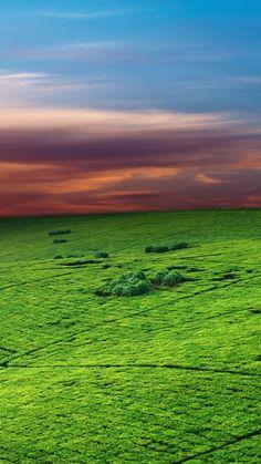 Green Field Sunset Sky iPhone 6 Wallpaper