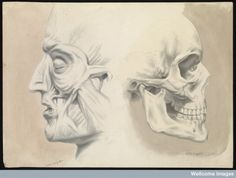 Two figures of the human head in profile
