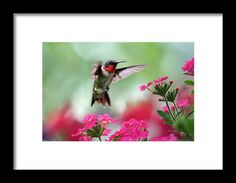 Ruby Garden Jewel Framed Print by Christina Rollo.  All framed prints are professionally printed, framed, assembled, and shipped within 3 - 4 business days and delivered ready-to-hang on your wall. Choose from multiple print sizes and hundreds of frame and mat options.