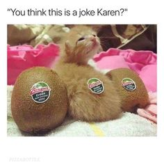 """You Think This Is A Joke Karen?"""