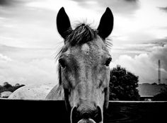horse__s_stare_by_thespinxsage.jpg (1024×759)