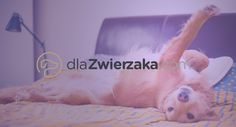 Pet-related services just a click away dlaZwierzaka.com is an online application that helps pet owners search for animal services in their neighborhood.