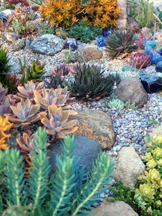 Check this link right here based on Landscaping Inspiration Succulent Rock Garden, Succulent Landscaping, Succulent Gardening, Landscaping With Rocks, Front Yard Landscaping, Garden Pavers, Types Of Succulents, Succulents Garden, Landscape Design