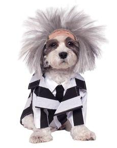 Dogs Beetlejuice costume