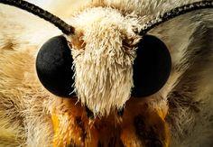 moth face close-up  - Edemin Ramirez