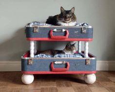 pinterest outdoor cat house ideas   DIY Idea – Bunk Bed for your Pets!  