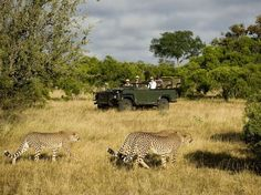South African safari, someday - when the kids are old enough to appreciate it.