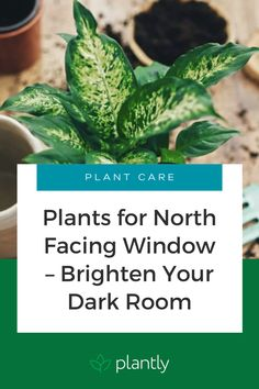 It is a misconception that all plants like a lot of sunlight but there are plants for a north-facing window. Some of them can get in very bad shape if they are too close to the light source or are exposed to direct sunlight – they can lose their color and become sickly yellow, they can develop brown edges or brown spots that can't be healed. Here is a list of the best plants for a northern exposure.