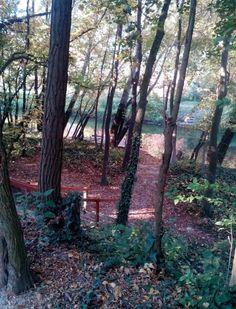 kavics Trunks, Plants, Drift Wood, Tree Trunks, Plant, Planets