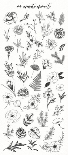 Botanical illustrations pack – Doodle – Verzierungen Lettering – Home crafts Illustration Design Graphique, Illustration Inspiration, Illustration Botanique, Illustration Blume, Watercolor Illustration, Herbs Illustration, Botanical Line Drawing, Floral Drawing, Botanical Drawings