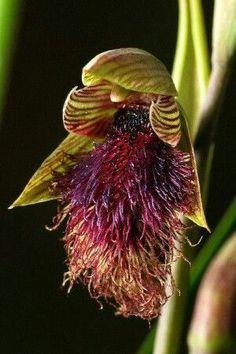 #Orquídea