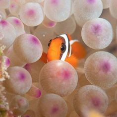 With 1,000+ different species of fish, diving in Fiji is unforgettable