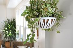 If you love plants as much as us, then its very possible that these hanging planters will find their way into the corner of every room, both inside and outside your home! Designed to hold a wide range of crawling + succulent plants, each piece is hand-made and the architectural