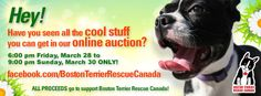 On-line Auction to benefit Boston Terrier Rescue Canada. Begins Friday 28 March @ 6:00 p.m. (EDT) to Sunday 30 March @ 9:00 p.m. (EDT)