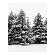 The smell of the woods will cure all that ails you. Winter Photography - Black and white picture of evergreen trees in winter. TITLE: North of Nine OPEN EDITION UNMATTED and UNFRAMED * Get it as a large ready to hang canvas - Black And White Tree, Black And White Pictures, Tree Photography, Winter Photography, Large Art Prints, Winter Trees, Winter Snow, Evergreen Trees, Coastal Art