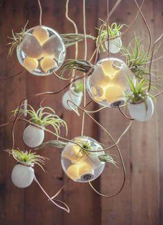 Lampade e piante grasse