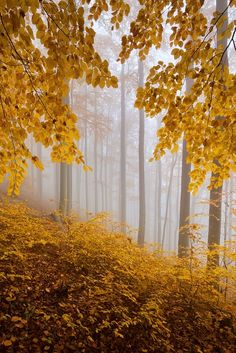 """I saw old Autumn in the misty morn, Stand shadowless like Silence, listening to Silence...""  Thomas Hood"