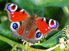 De natuur is de perfecte inspiratiebron... wat een schoonheid!